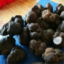 top grade mature black dried truffles - product's photo