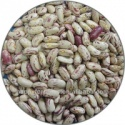 hps quality light speckled kidney beans long shape - product's photo