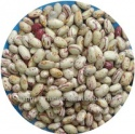 light speckled kidney beans american oval shape/cranberry beans - product's photo