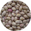 light speckled kidney beans huanan round shape - product's photo