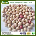 light speckled kidney bean sugar bean 2014 new products  - product's photo