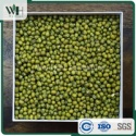 ama certified green mung bean - product's photo