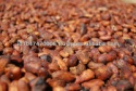 indonesian origin sun dried cocoa - product's photo