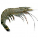 prawn - product's photo