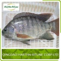 frozen black tilapia fish - product's photo