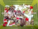 frozen seafood mix - product's photo