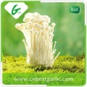 100% natural fresh enoki mushroom - product's photo
