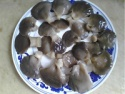 pickled oyster mushroom price - product's photo