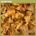 cantharellus cibarius - product's photo