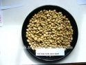 fava beans - product's photo