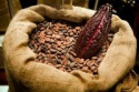 best selling roasted cocoa beans - product's photo