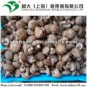 fresh shiitake mushroom - product's photo