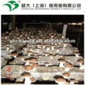 best quality fresh shiitake mushroom - product's photo