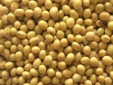 origin non gmo soya beans - product's photo