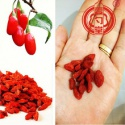 goji berry dried fruit - product's photo