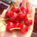 canned cherry fruit  - product's photo