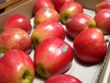 gala apples - product's photo