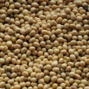 soy beans wholesale for serious buyers - product's photo