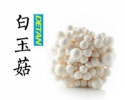white beech mushroom - product's photo