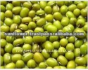 green mung beans - sprouting new crop - product's photo