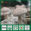 edibal fungus donko flower shiitake mushroom - product's photo