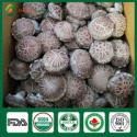 shiitake mushrooms uk,shiitake mushroom stem - product's photo