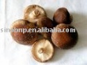 shiitake mushroom extract - product's photo