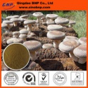 high quality of organic shiitake mushroom p.e. - product's photo