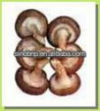 shiitake mushroom grow bag - product's photo