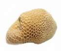 buffalo honey comb subproduktovs - product's photo