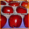 china fresh red apple - product's photo