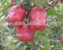 red delicious apple/huaniu apple - product's photo