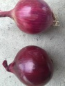 high quality 2016 crop red onion price - product's photo