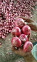 fresh red onion - product's photo