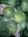 fresh cabbage for sale - product's photo