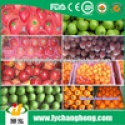 fresh fruit exporters in china - product's photo