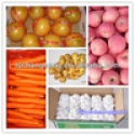 fruit and vegetables exporter/fresh fruit and vegetables dealers - product's photo