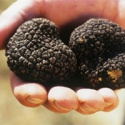 high quality wild black truffle 100%  - product's photo