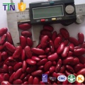 ttn red beans price kidney beans with high protein specification - product's photo