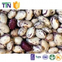 ttn black purple speckled and light speckled kidney bean - product's photo