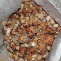 frozen king bolete mushrooms - product's photo