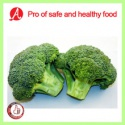 iqf frozen broccoli from china - product's photo