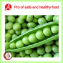 high quality iqf green peas on hot sale - product's photo
