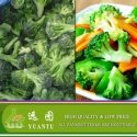 frozen broccoli/iqf broccoli/broccoli - product's photo