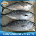 sea frozen bonito tuna fish for wholesale - product's photo