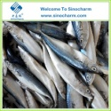 frozen fish mackerel price - product's photo