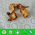 organic chanterelle mushrooms - product's photo