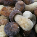 wild boletus mushrooms - product's photo