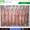 fresh frozen lamb meat - product's photo