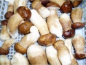 iqf boletus edulis - product's photo